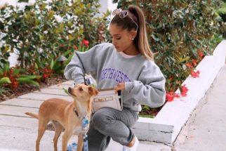 Ariana Grande, uma apaixonada convicta por cachorros