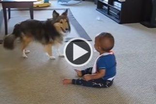 Bebê não consegue parar de rir das palhaçadas de cachorro
