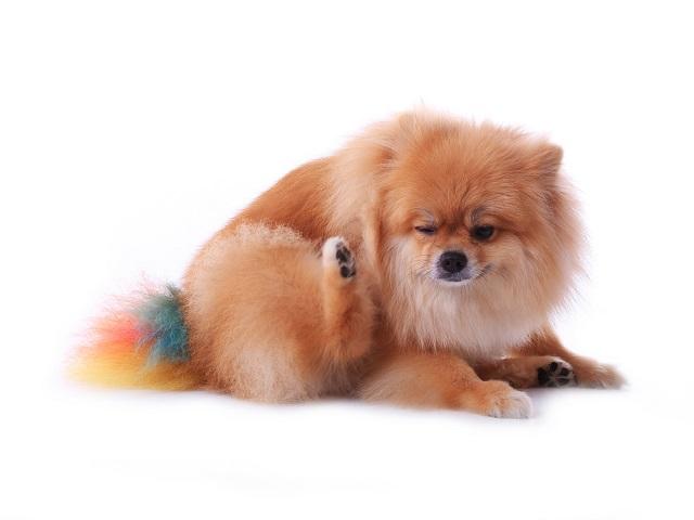 Alguns cuidados devem ser tomados para evitar problemas nos olhos dos cães