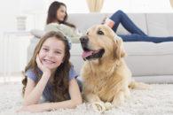 É isso que você precisa fazer para ter em casa um cão tranquilo