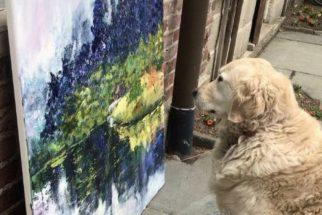 Cadela se torna crítica de arte e faz sucesso na internet
