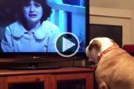 Cadela tenta alertar personagem de filme sobre perigo e viraliza