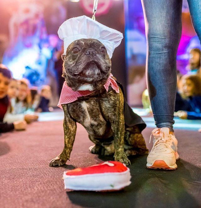 Cães desfilam looks em várias categorias no Fashion Dog's Day