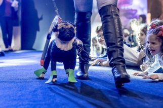 Cães desfilam looks em várias categorias no Fashion Dog's Day