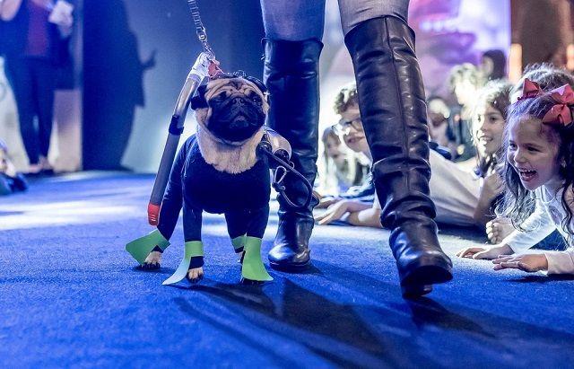 Fashion Dog's Day - Cristal ficou em segunda lugar na categoria 'Fantasias'