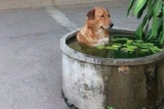 12 cães fazendo coisas estranhas que vão te fazer rir