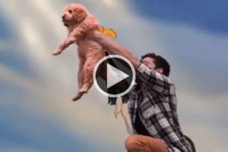 Com paródia de filme da Disney, rapaz apresenta o seu novo cão ao mundo