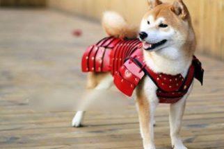 Empresa japonesa fabrica armaduras de samurai adaptadas para pets