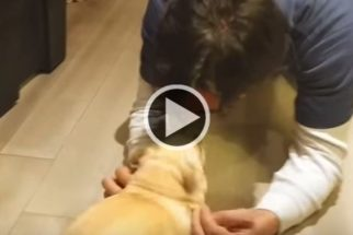 Fofura: cadelinha não contém alegria ao reencontrar tutor