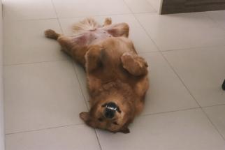 Fofuras: 10 fotos de cães que vão melhorar o seu dia