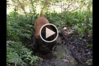 Hilário: cachorro se diverte enfiando a cabeça dentro da lama