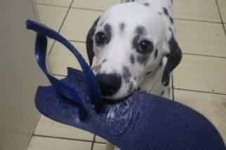 Juíza 'viraliza' por usar memes de animais para dar aula de direito penal