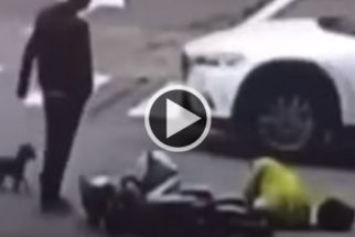Lealdade: Cão persegue motorista que bateu na moto de sua tutora