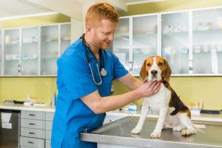 Como é o tratamento da leishmaniose visceral canina