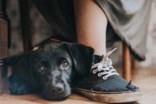Kennel club anuncia vencedores de competição de fotografia canina