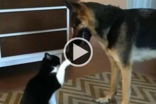 """""""Luta"""" entre cachorro e bichano acaba da maneira mais fofa possível"""