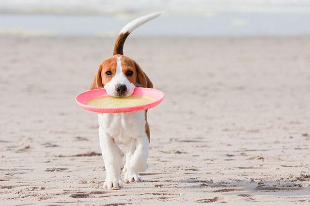 Seu cão precisa de brincadeiras produtivas. Invista nisso