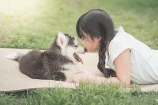 Um por família: Cidades chinesas limitam número de cães por lar