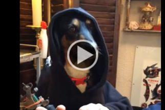 Vídeo: cadela aproveita oportunidade e segue sonho de ser tatuadora