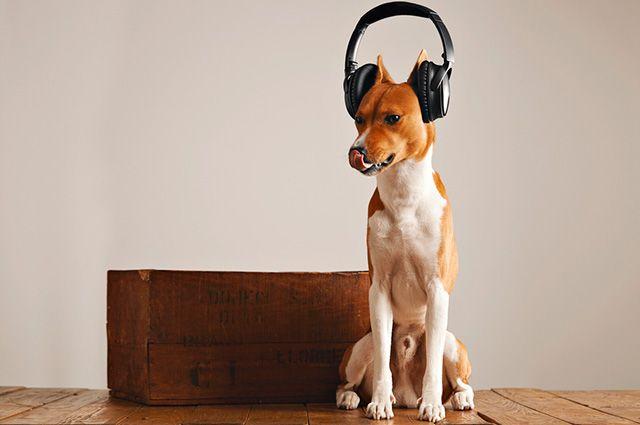 13 nomes para cães inspirados em cantores brasileiros