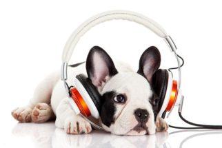 15 nomes para cães inspirados em artistas do rock