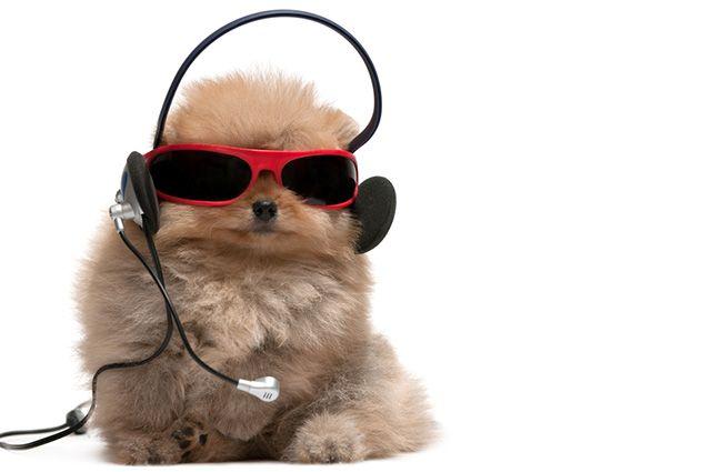 32 nomes de cães inspirados em cantores da música pop