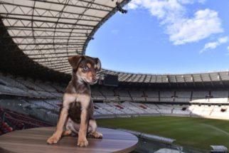 Conheça Ginga, a nova mascote do estádio Mineirão
