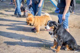 A importância do adestramento e atividades físicas para cães