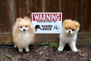 Cuidado com o cão! 12 pets que são extremamente 'perigosos'
