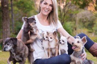 Conheça os cachorros de Ana Hickmann, Xuxa, Sabrina e outros famosos