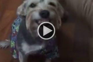 Cadelinha faz bagunça e não consegue fazer nada além de rir