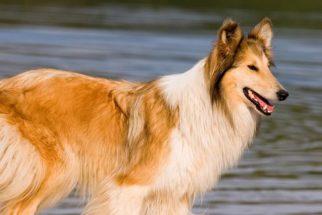 Celebridades caninas: conheça as raças de cães que estrelaram filmes