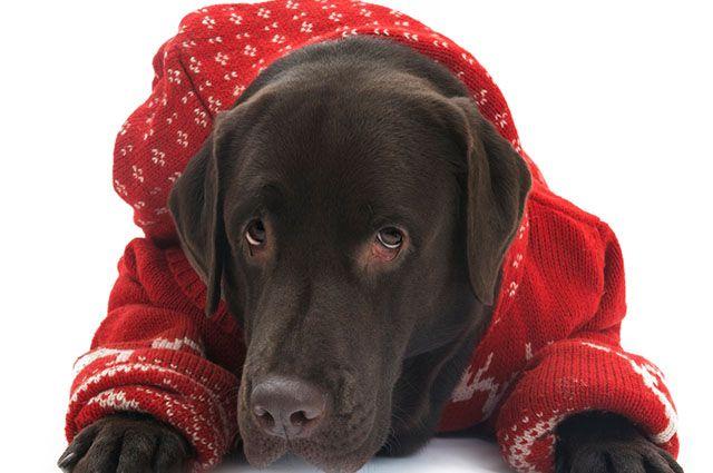 Devo fazer roupinha de frio para o meu cão?