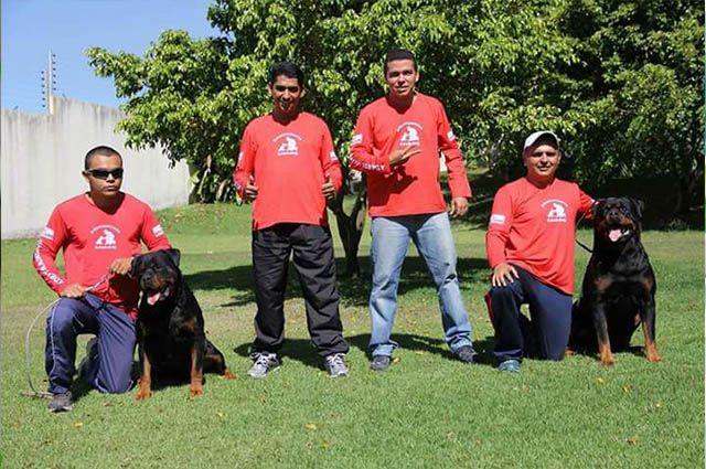 Especialista explica a importância do adestramento e de atividades físicas para cães