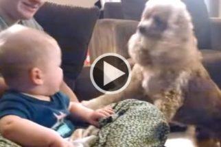 Fofura: bebê não segura o riso ao ver cocker spaniel com bolinha