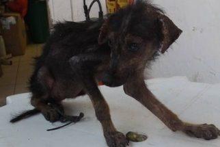 Conheça a história de recuperação da cadela Glorinha