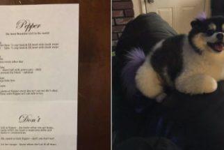 Mãe coruja: tutora deixa lista de instruções para sobrinho cuidar de cadela