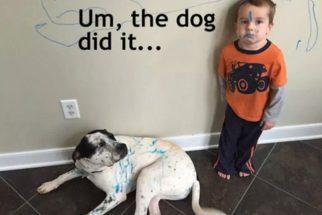 Razões para não deixar seu filho sozinho com o cão (ou deixar sim!)