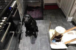 Comilona: cadela abocanha bolo de casamento horas antes da cerimônia