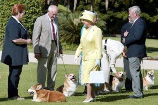 God save the queen: rainha Elizabeth adota cão de funcionário morto