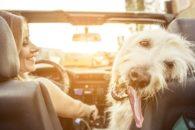 Vai viajar de férias com seu cãozinho? Veja dicas para que corra tudo bem