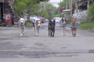 Cães de rua são transformados em 'guardas' na Tailândia