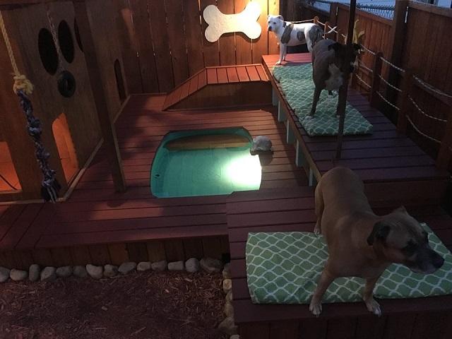 Tatuador transforma o quintal de casa em playground para seus cães