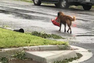 """Cão faz sucesso na internet após """"se preparar"""" para tempestade"""