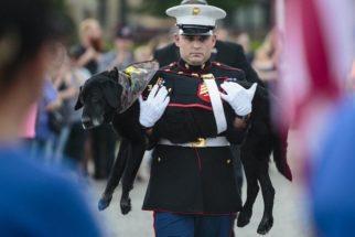 Cão militar que atuou no Afeganistão ganha despedida emocionante