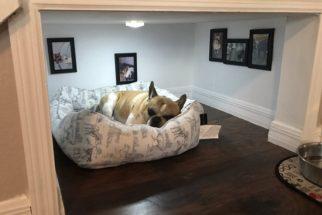 Fofura: Homem cria quartinho embaixo de escadas para o seu cãozinho
