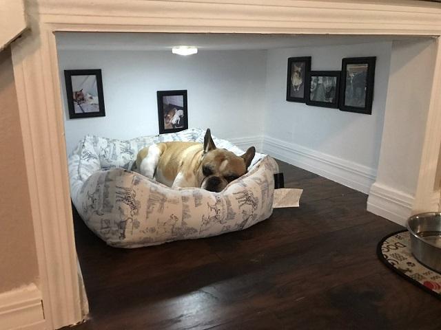Fofura: Tutor cria quartinho embaixo de escadas para o seu cãozinho