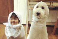 Amizade: Garotinha e seu poodle gigante são a coisa mais fofa que você pode ver