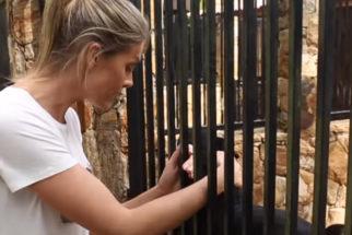 Amor por pets: Ana Hickman tem em casa canil com mais de 20 cãezinhos
