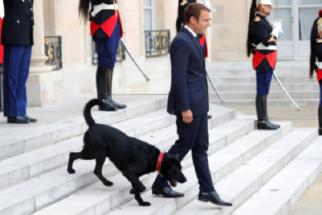 Conheça Nemo, o novo cão presidencial francês que vem roubando a cena